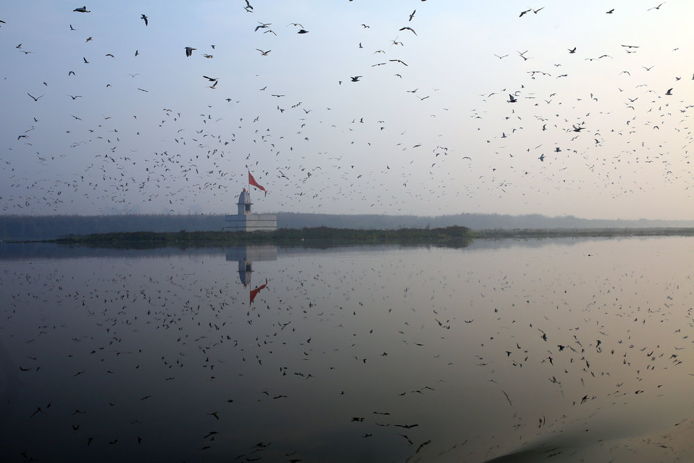 A Hindu Temple is pictured surrounded by birds at dawn on New Delhi's Yamuna River, India