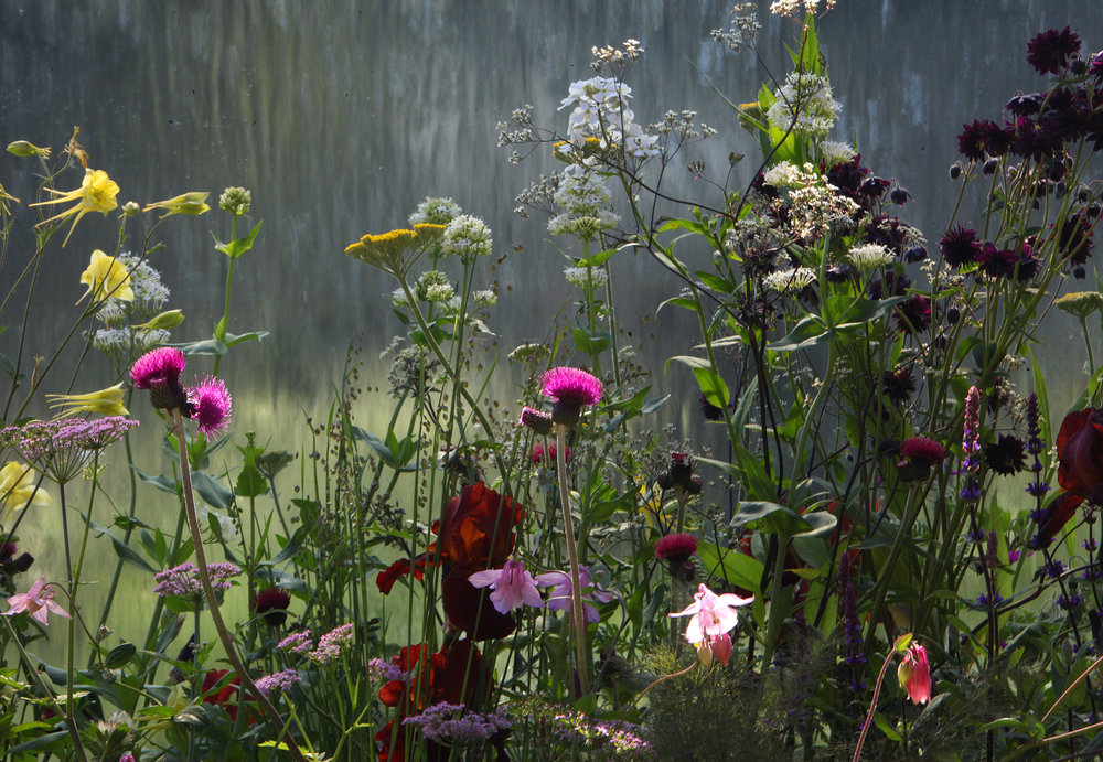 RNIB Chelsea Flower Show Fresh Garden