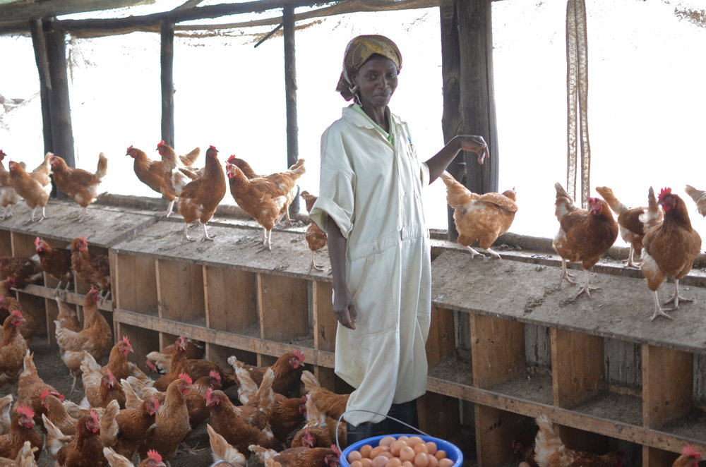 Zamura Farms - Collecting Eggs.JPG