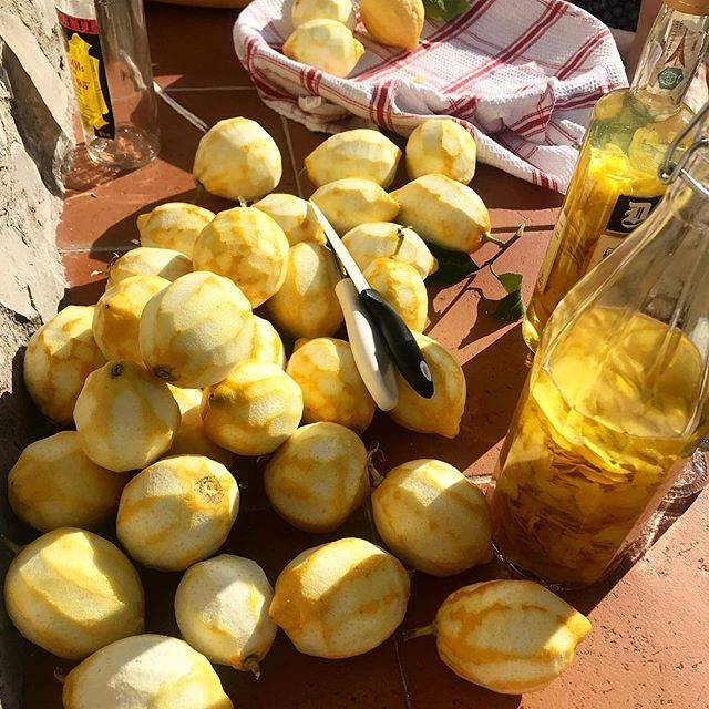 making #limoncello in the sun