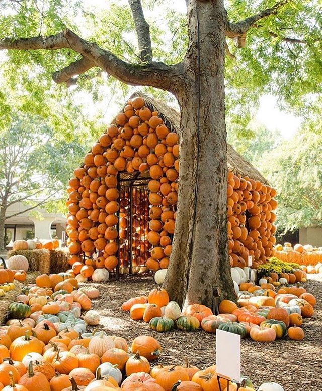 Attention Nashville Agents! I have a client looking for a second home in the downtown area, DM or E-Mail me for more details, please. . . . . . Pictured here is the amazing Cheekwood Harvest at the @cheekwood estate in Nashville, TN.  #lookingforanagent #nashville #nashvillerealestate #nashvillerealtor #tennessee #nashvilletennessee #scottsdale #scottsdaleagent #arizona #realestate #chandlerrealtor #arizonarealtor #harvest #cheekwood #fall #pumpkinpatch #gilbertrealtor #mesarealtor #realtorreferrals #homesbyheathers