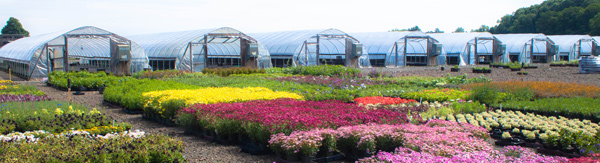 Sunny Border Nurseries