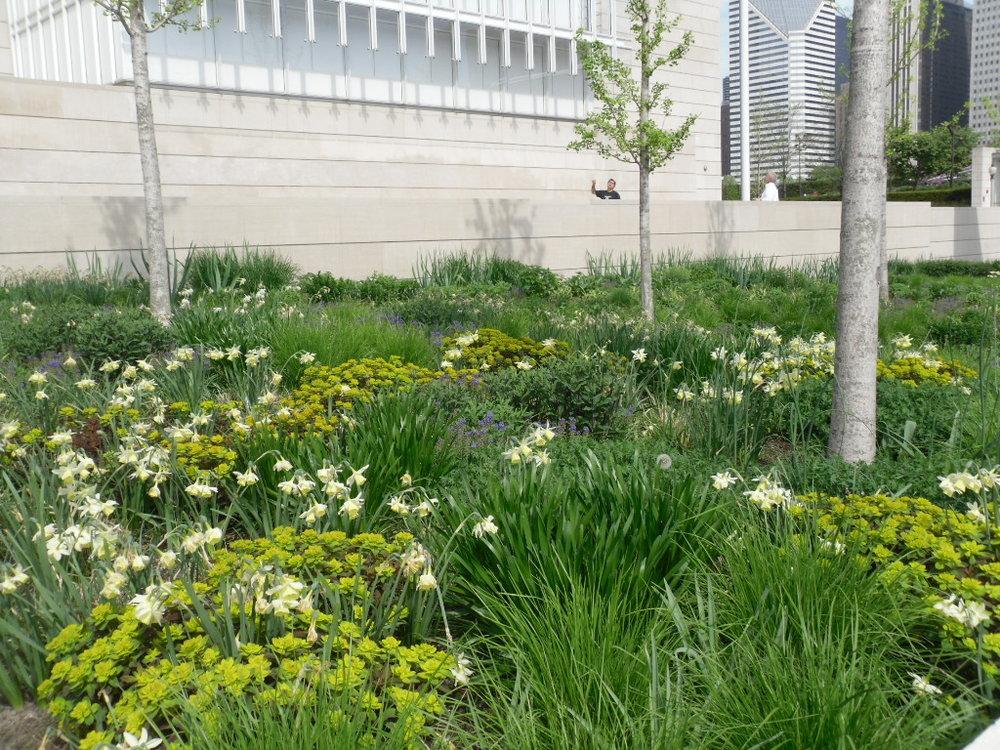 Art Institute spring.jpg