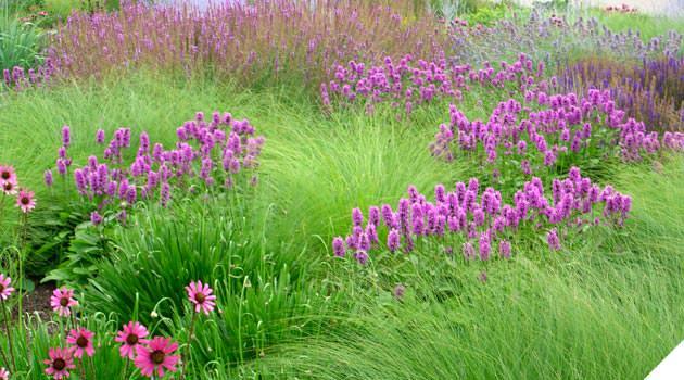 Roy Diblik planting design