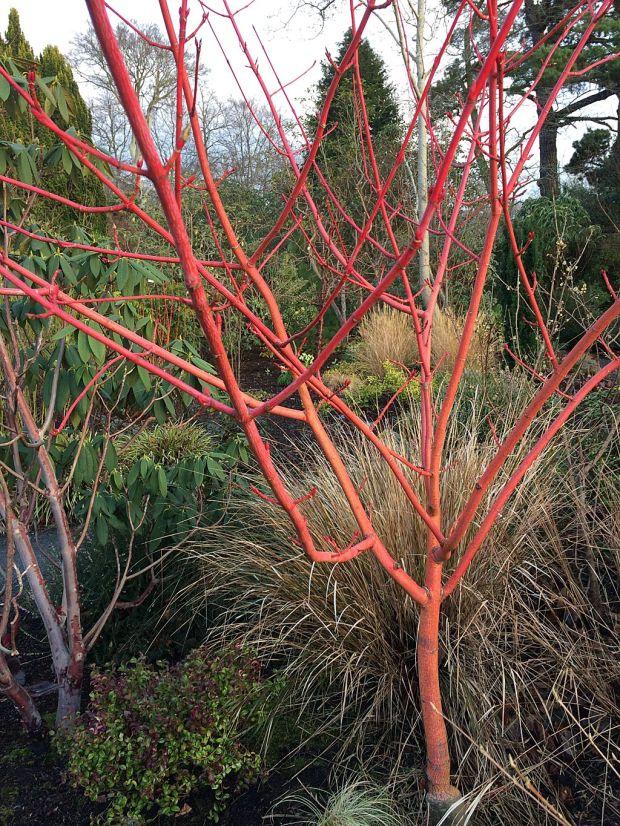 acer-x-conspicuum-phoenix.jpg