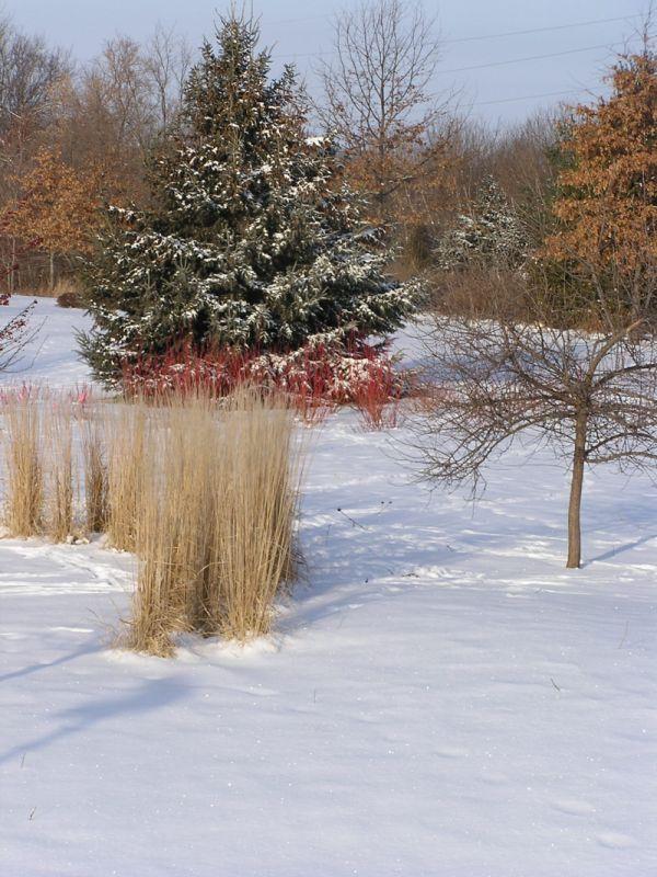 Winter-interest-1.jpg