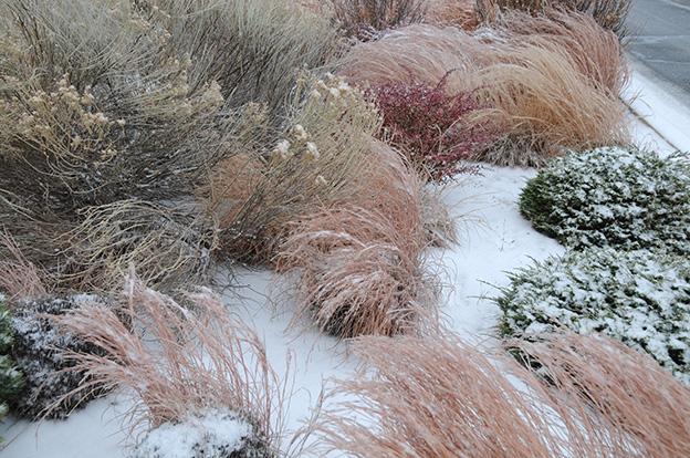 Ornamental-Grass.5.jpg