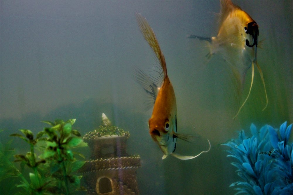 My 2 other fish
