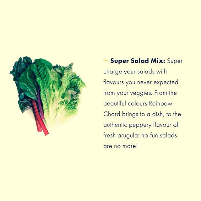 Today's AEVA spotlight is the Super Salad Mix — all hail King Caesar Salad! 👑🥬 Discover the other varieties on our website: justvertical.com/seeds . . . . #foodie #verticalfarming #verticalgardens #urbanfarming #hydroponics #foodsecurity #sustainability #cleanfood #eatclean #healthy #food #fresh #farmersmarket #realfood #organic #natural #cooking #health #healthyfood #eatgreen