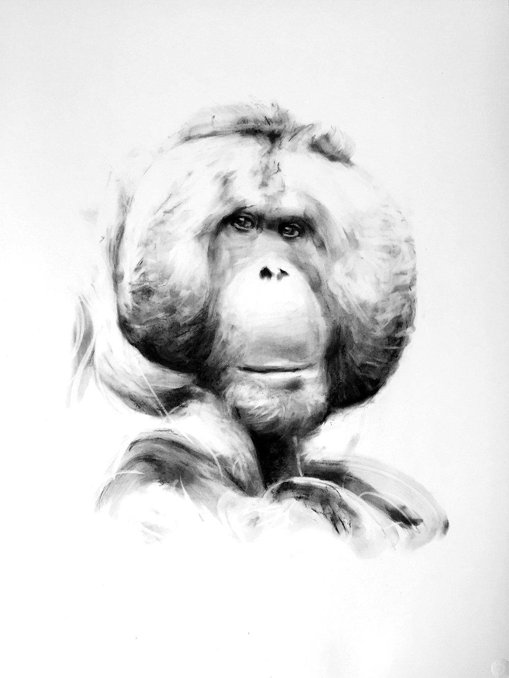 Bornean Oranguatan