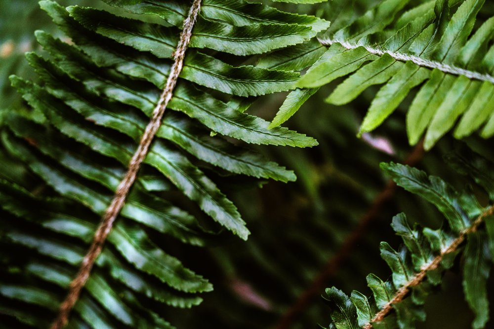 dark-green-foliage_4460x4460.jpg