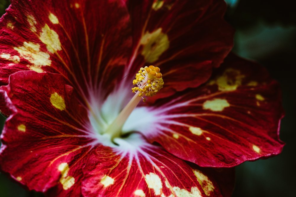 red-tropical-flower_4460x4460 (1).jpg