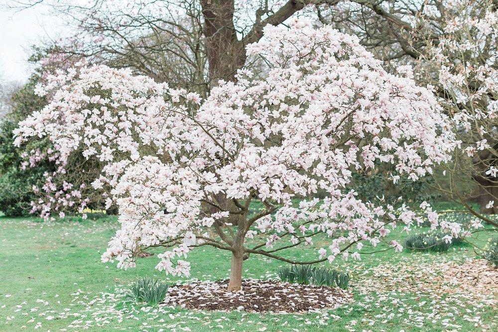 blossom-tree-kew-gardens.jpg