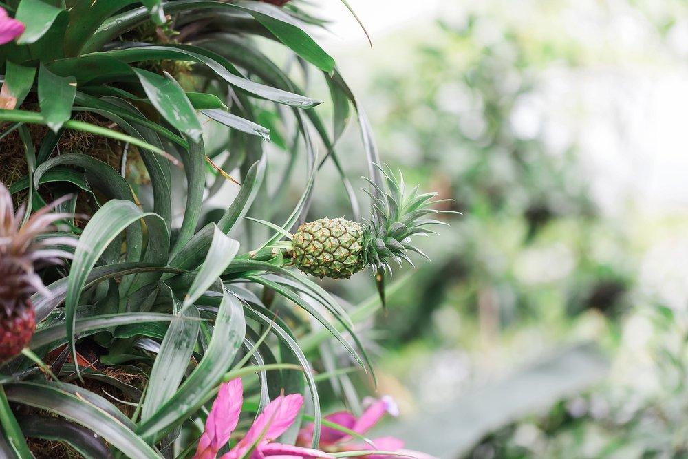 botanical-kew-gardens.jpg