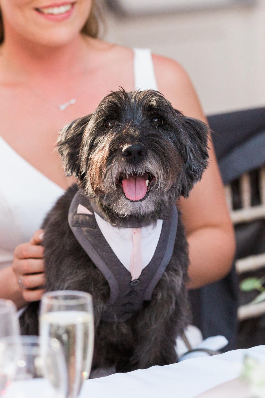 dog at wedding somerset.jpg