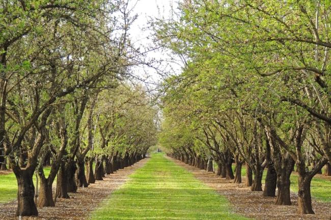 tree-3232654_1920.jpg