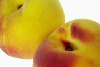 Hale Haven Peach.jpg