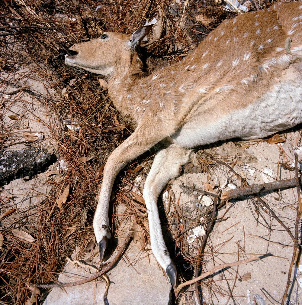 9-deer034700-3-1.jpg