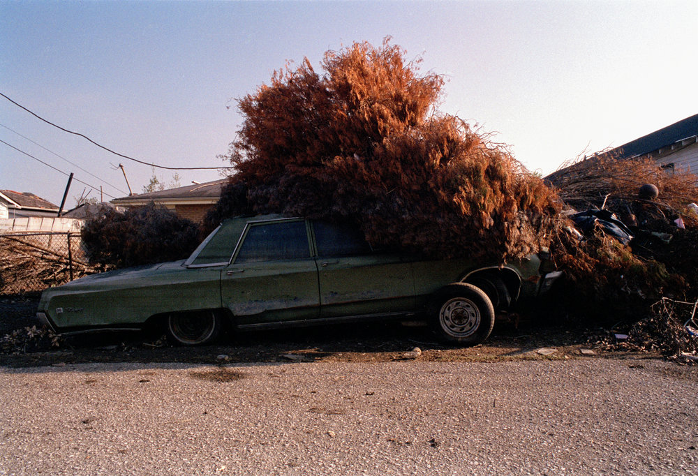 96-car_tree2#26.jpg
