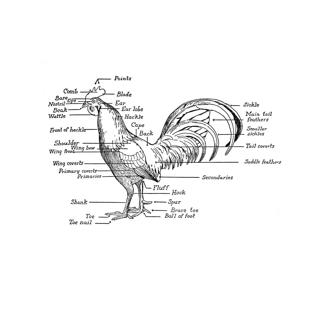 14-anatomy-bird.jpg