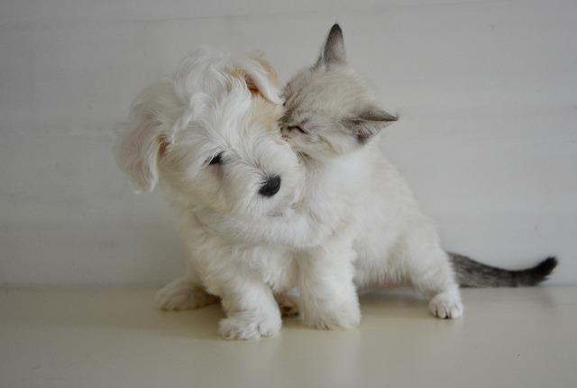 kiss-2728106_640.jpg