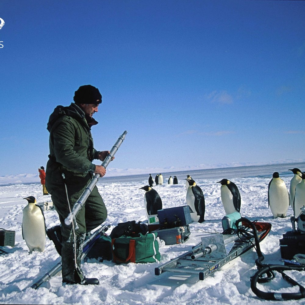 WEB_Emperor-Penguins.jpg