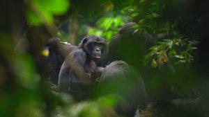 Bonobo_WEB.jpg