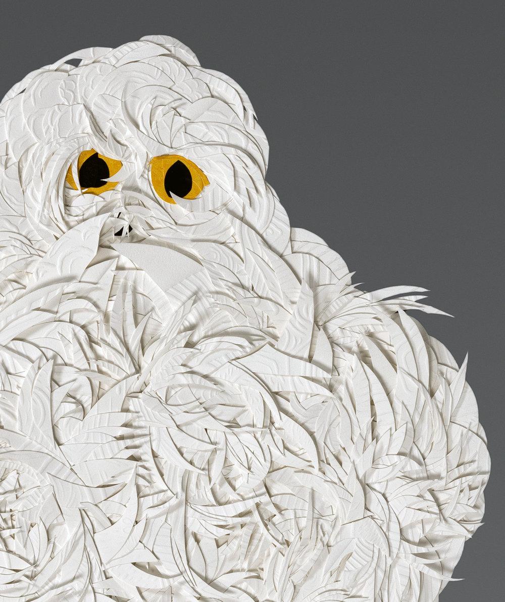 Johnson_Owl_detail.jpg