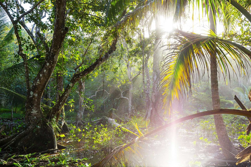 Eco System - The ecologically balanced environment Bamboo forests create, allow for countless types of animals, insects & birds to thrive peacefully – It's also a safe haven for many endangered species (including Red Pandas, Monkeys, Tigers, just to name a few...).