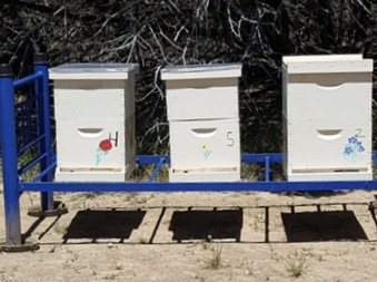 """CG's """"Bunkbed"""" hive stands !"""
