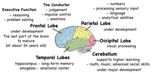 2014-0701-brain2.jpg