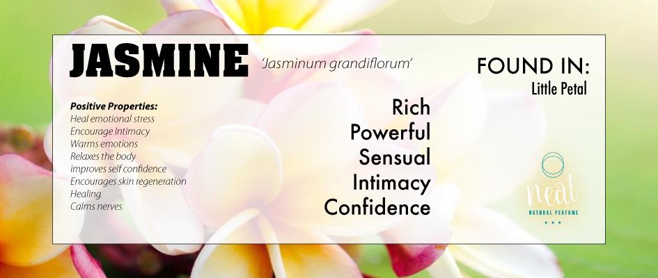 JASMINE_web.png