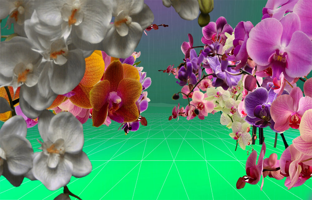 Sophie Penkethman-Young - Woolworths Orchid