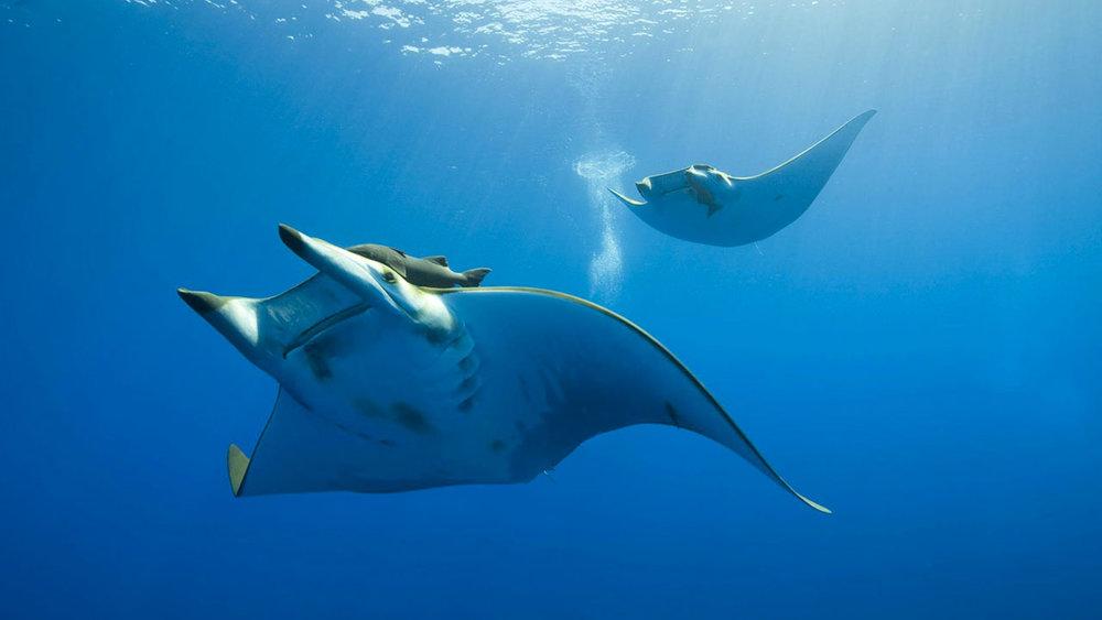 Diving & Snorkeling -