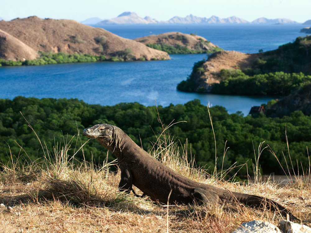 Komodo Island -