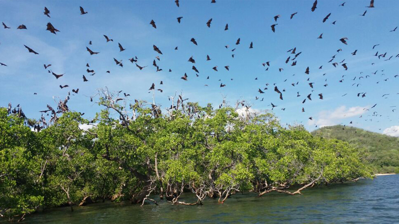 Kalong-Pulau-Komodo.jpg