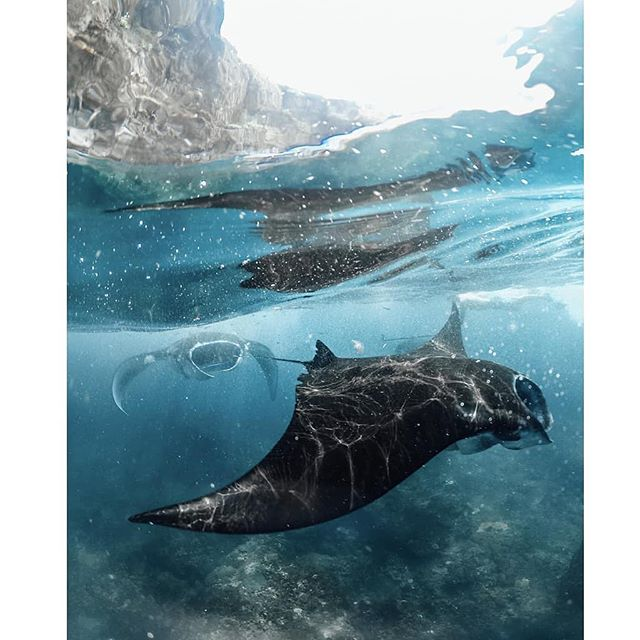 A unique travel experience in one of the most beautiful places on Earth. Contact us to organize your ultimate adventure 🌴✨✨ Credit: 📷 @jackson.groves . . . #helloflores #visitflores #floresiland #floresview #islandview #boattrip #mantapoint #mantaray #diving #diving_photography