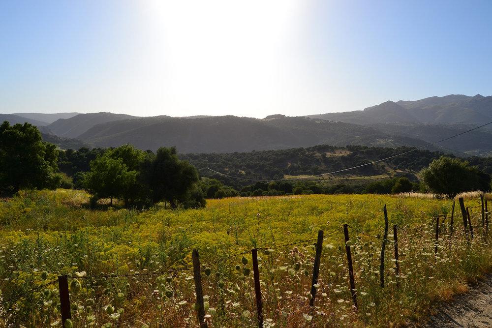 Serranía de Ronda (Málaga)