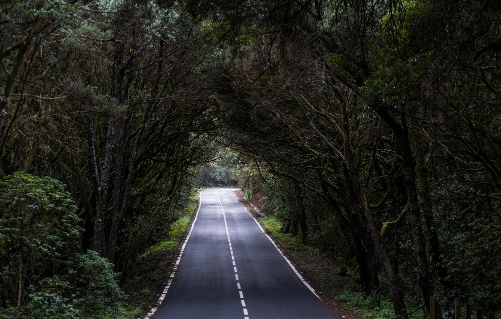 Qué hacer en La Gomera - Parque Nacional de Garajonay