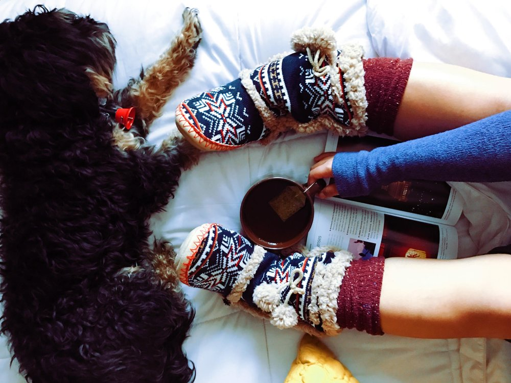 animal-cozy-cup-218763.jpg