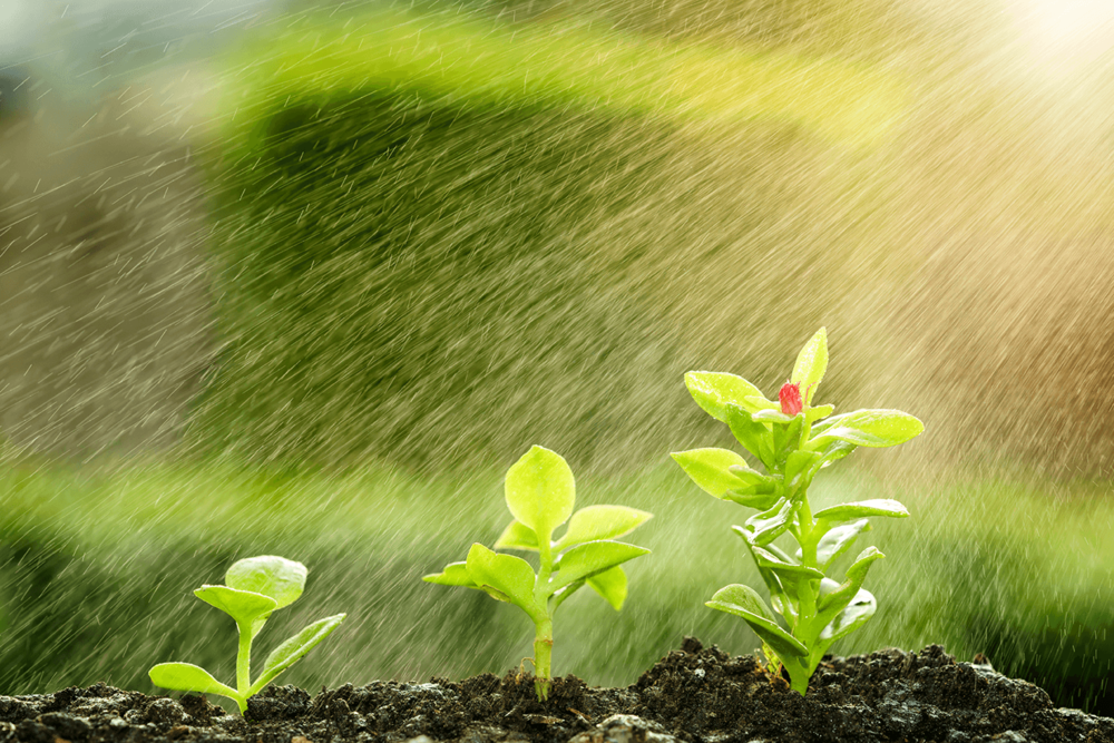 Meaningful Water Conservation - We've all seen the sprinklers going during a rainstorm. With our real-time weather alerts, you'll stay ahead of precipitation to drastically reduce over-watering, and to ensure you save your water for when it's needed most... not when it's free from the sky.