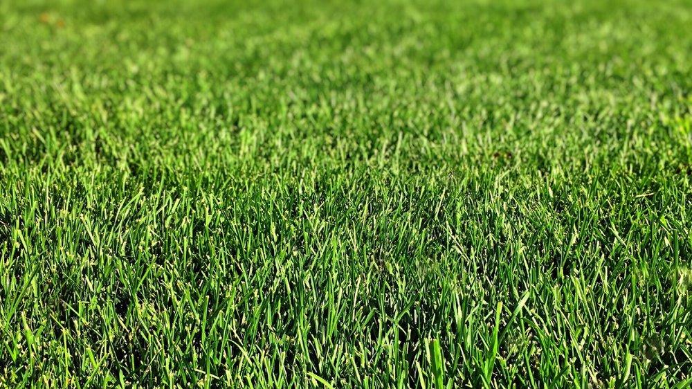 grass-plant-field-lawn-meadow-green-708831-pxhere.com.jpg