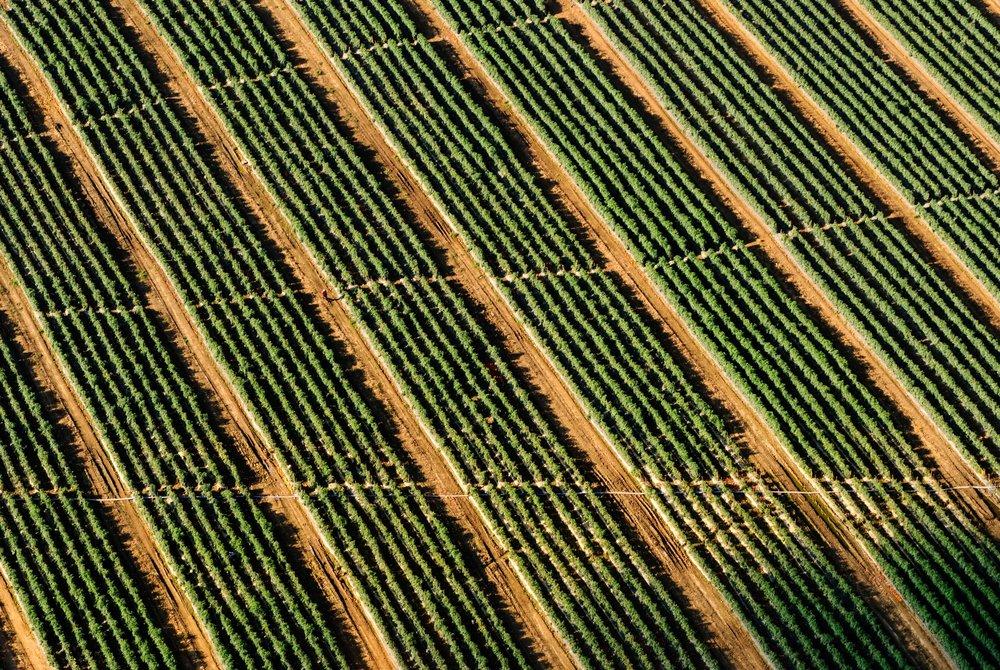 grass-plant-wood-field-farm-lawn-892088-pxhere.com.jpg