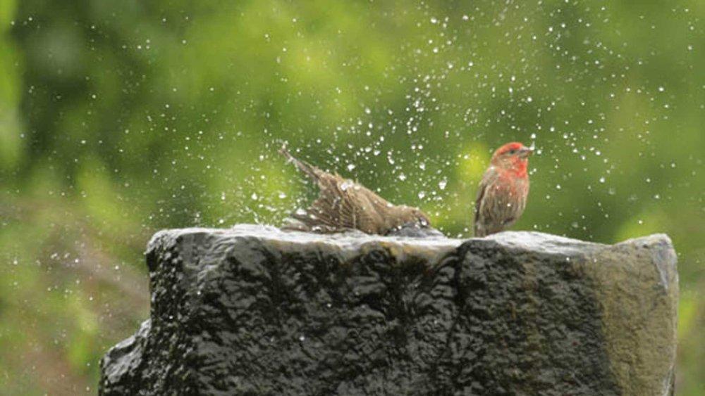 Auburn-Sky-Landscaping-Aquascape-Birds-in-Fountain.jpg