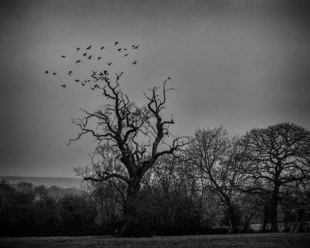 The Murder Tree.jpg