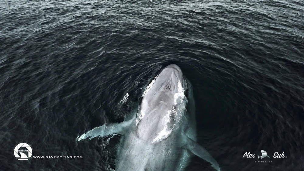 Whale-Watching-Chasing-A-Sun-Angela-Sun-3.jpg