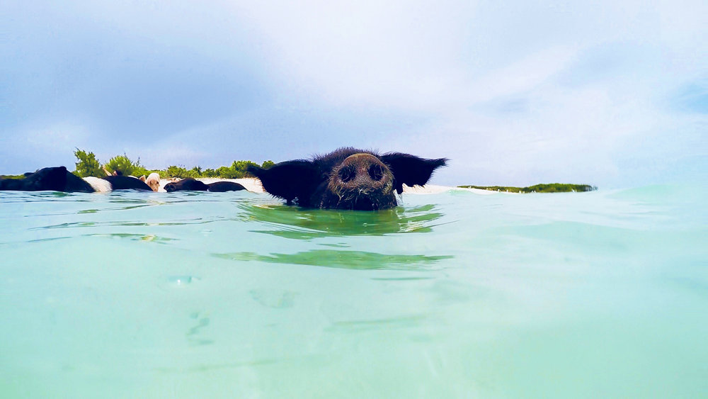 Chasing-A-Sun-Swimming-Pigs-Exuma-Bahamas-Angela-Sun-3.jpg
