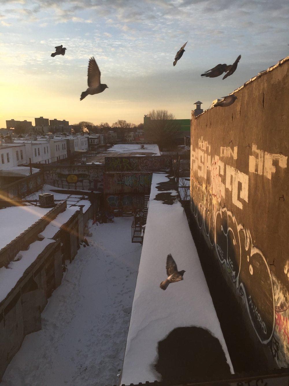 pigeons-sunrise.jpg