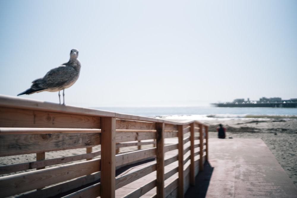 02 - Santa Cruz.jpg