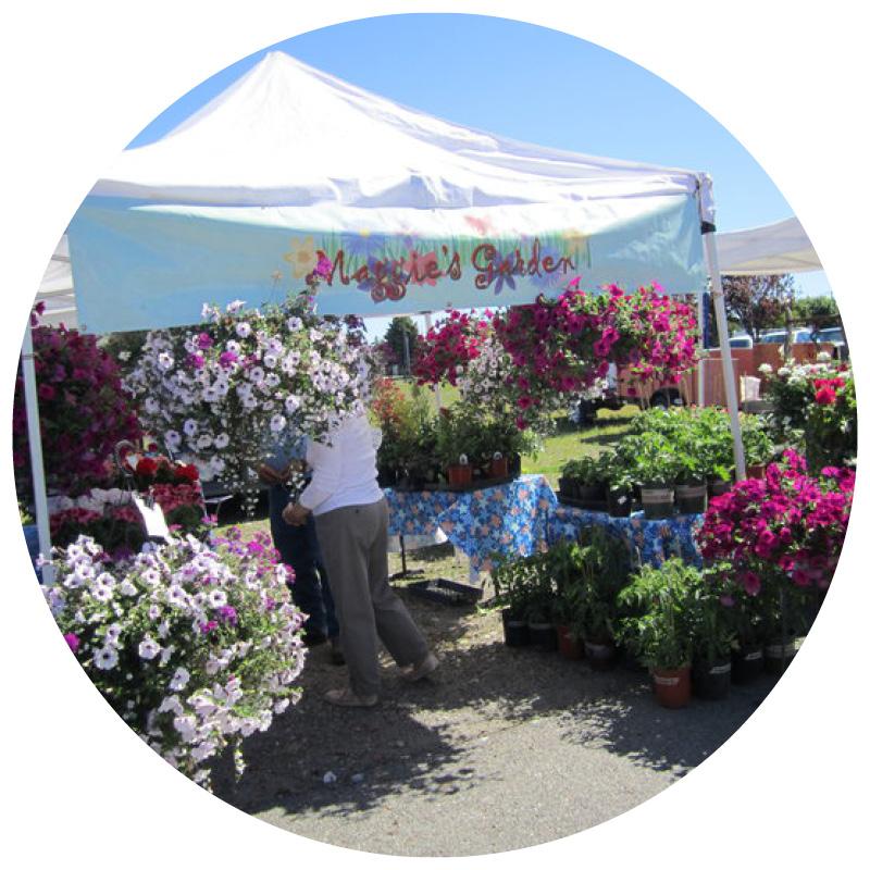 Maggie's Garden   Flowering Baskets, Planters, Perennial Plants & Herbs
